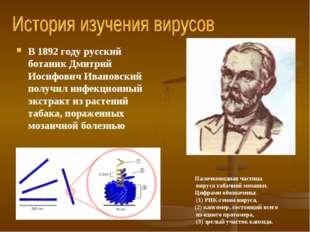 В 1892 году русский ботаник Дмитрий Иосифович Ивановский получил инфекционный