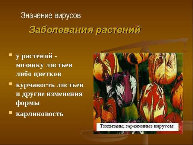 у растений - мозаику листьев либо цветков курчавость листьев и другие изменен...