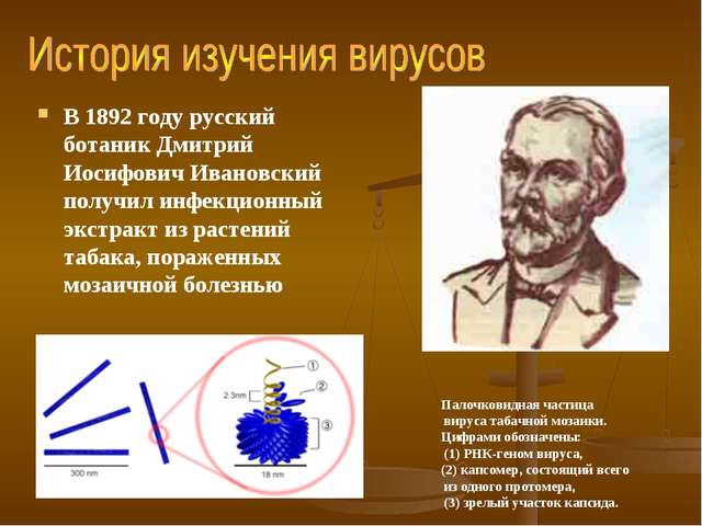 В 1892 году русский ботаник Дмитрий Иосифович Ивановский получил инфекционный...