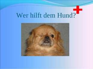 Wer hilft dem Hund?