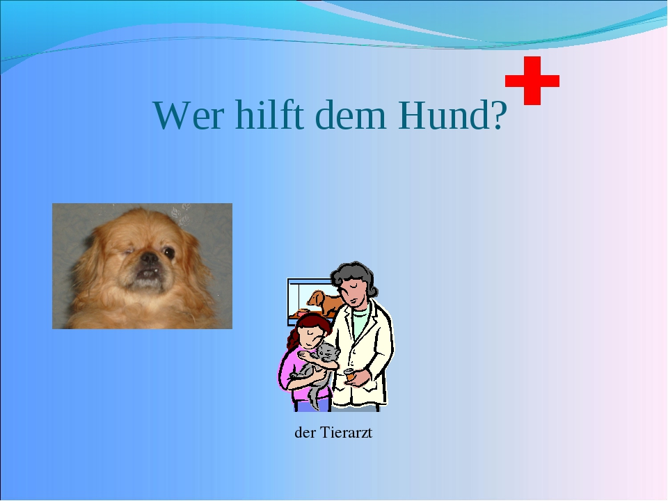 Wer hilft dem Hund? der Tierarzt