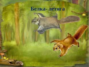 Белка- летяга