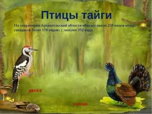 глухарь дятел На территории Архангельской области обитает около 250 видов пти