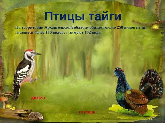 глухарь дятел На территории Архангельской области обитает около 250 видов пти...