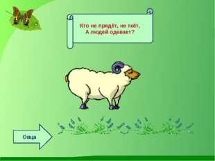 Кто не прядёт, не ткёт, А людей одевает? Овца