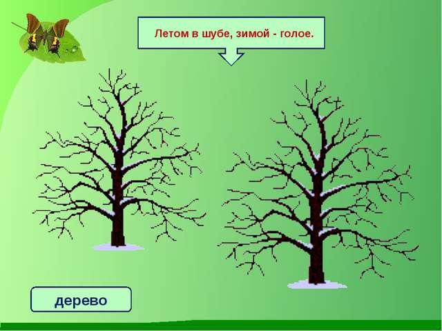 Летом в шубе, зимой - голое. дерево