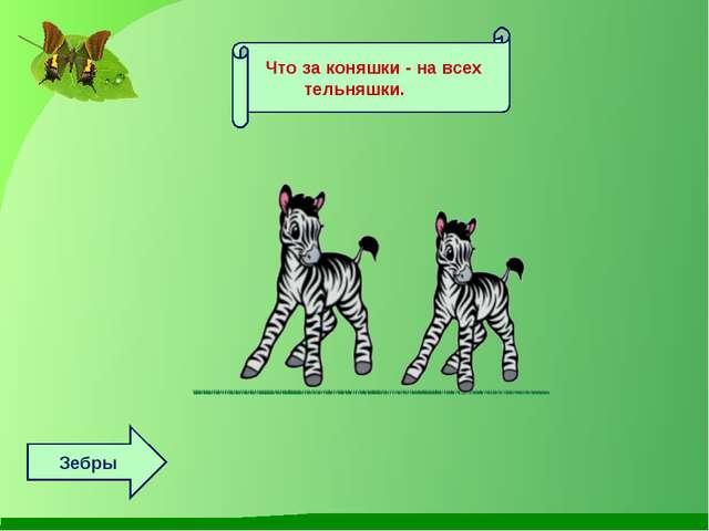 Что за коняшки - на всех тельняшки. Зебры