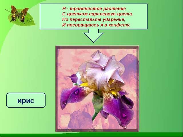 Я - травянистое растение С цветком сиреневого цвета. Но переставьте ударение...