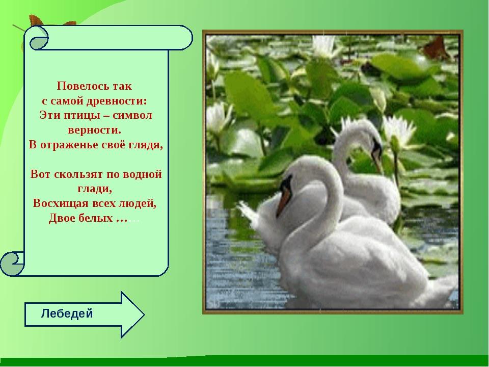 Л Лебедей Повелось так с самой древности: Эти птицы – символ верности. В отра...