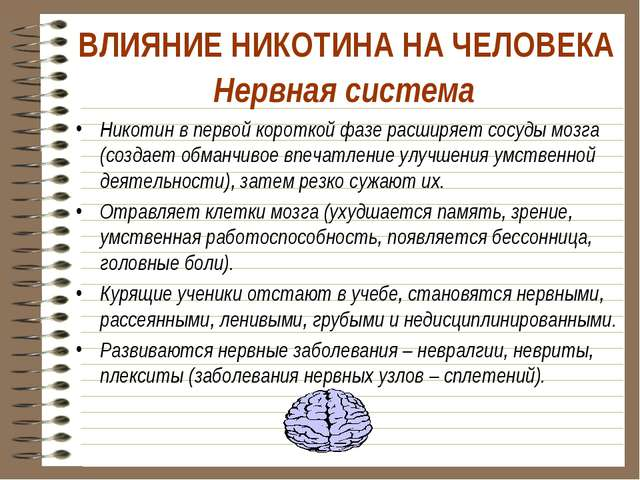 Нервная система Никотин в первой короткой фазе расширяет сосуды мозга (создае...
