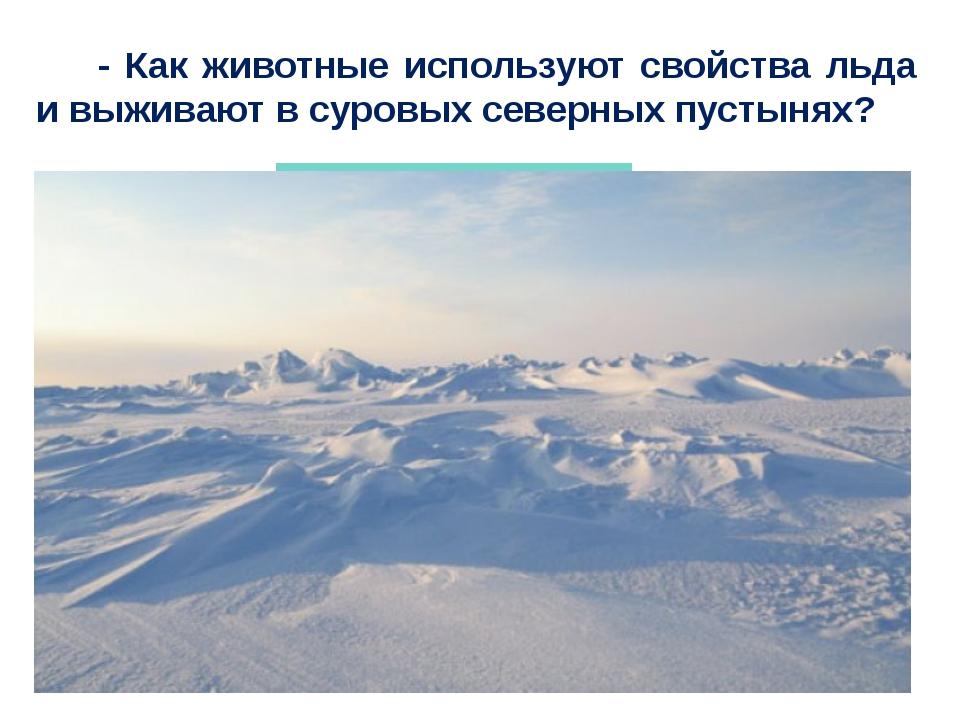 - Как животные используют свойства льда и выживают в суровых северных пустын...