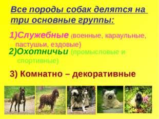 Все породы собак делятся на три основные группы: Служебные (военные, караульн