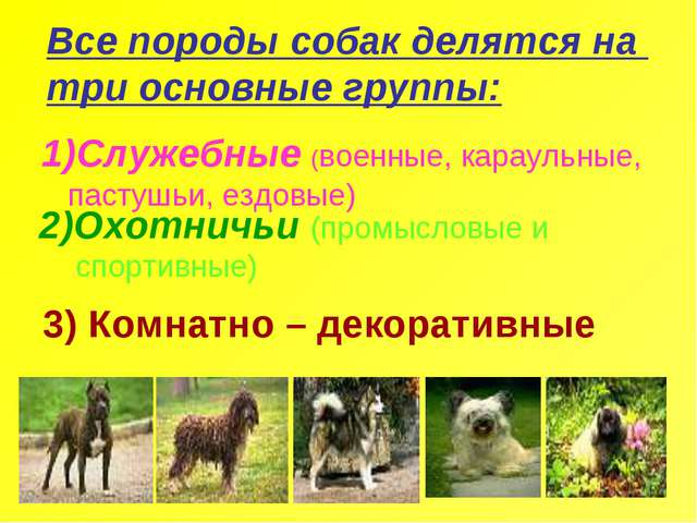 Все породы собак делятся на три основные группы: Служебные (военные, караульн...