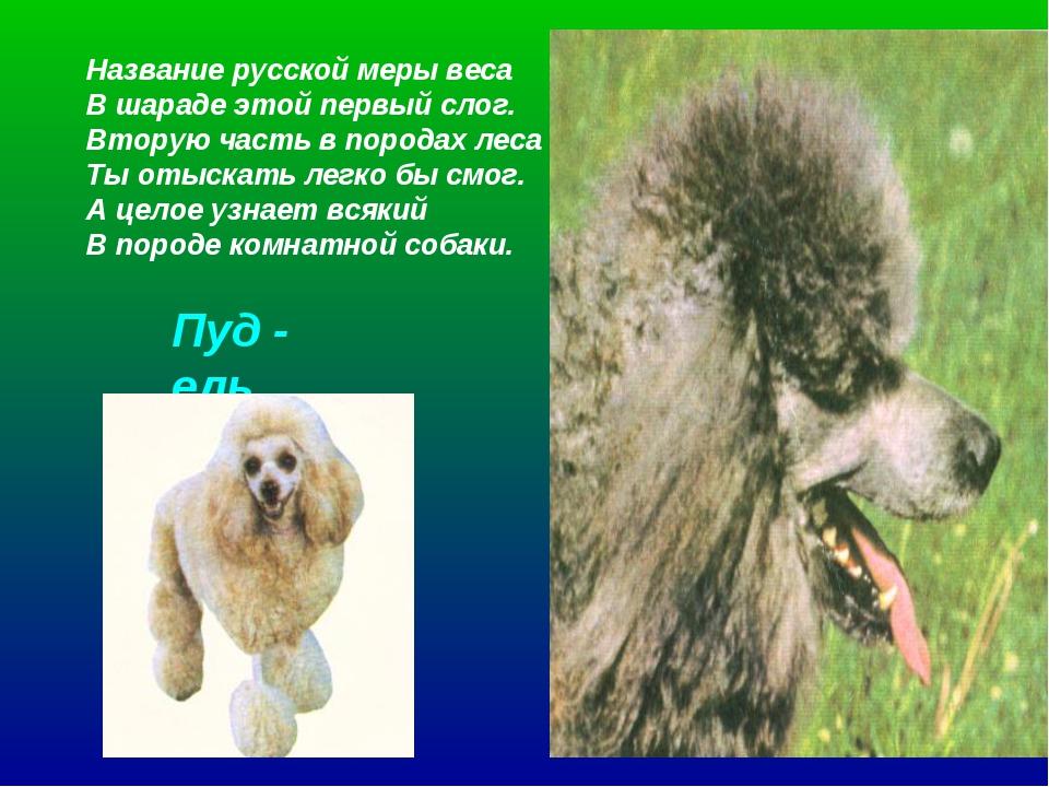 Название русской меры веса В шараде этой первый слог. Вторую часть в породах...