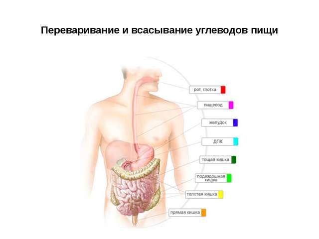 Почему в желудке долго не переваривается пища