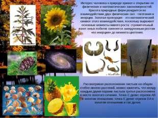 Интерес человека к природе привел к открытию ее физических и математических з