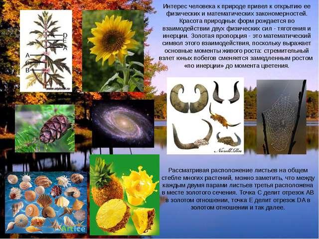 Интерес человека к природе привел к открытию ее физических и математических з...