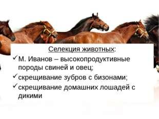 Селекция животных: М. Иванов – высокопродуктивные породы свиней и овец; скрещ