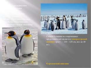 Научная классификация Царство:Животные Тип:Хордовые Подтип:Позвоночные Кла