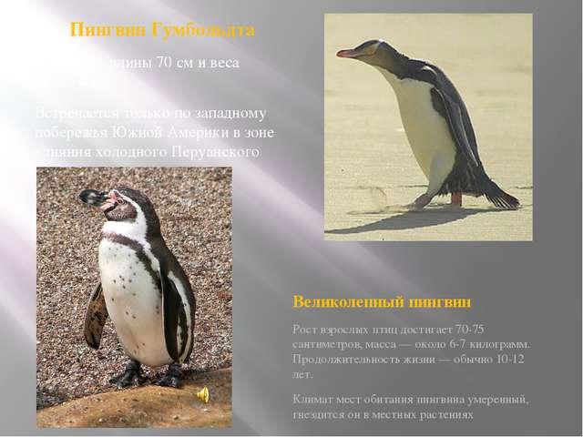 Пингвин Гумбольдта Достигает длины 70 см и веса около 4 кг. Встречается толь...