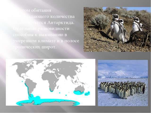Местом обитания преобладающего количества видов является Антарктида. Отдельн...