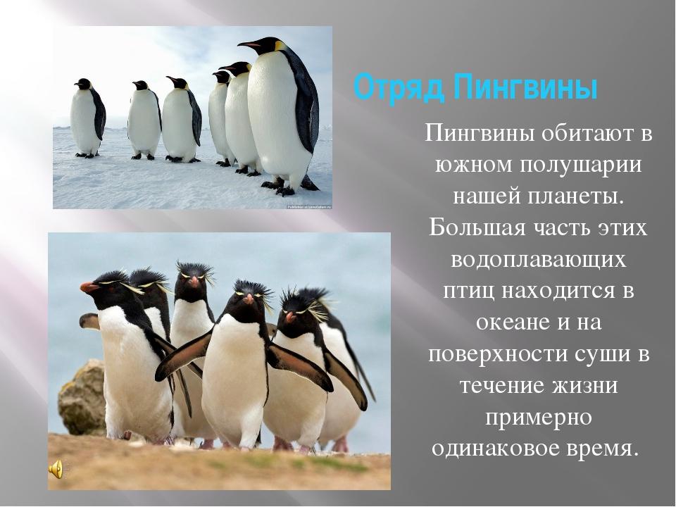 Отряд Пингвины Пингвины обитают в южном полушарии нашей планеты. Большая част...