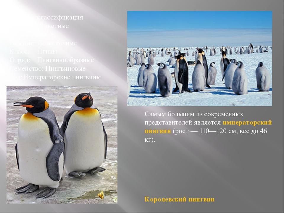 Научная классификация Царство:Животные Тип:Хордовые Подтип:Позвоночные Кла...