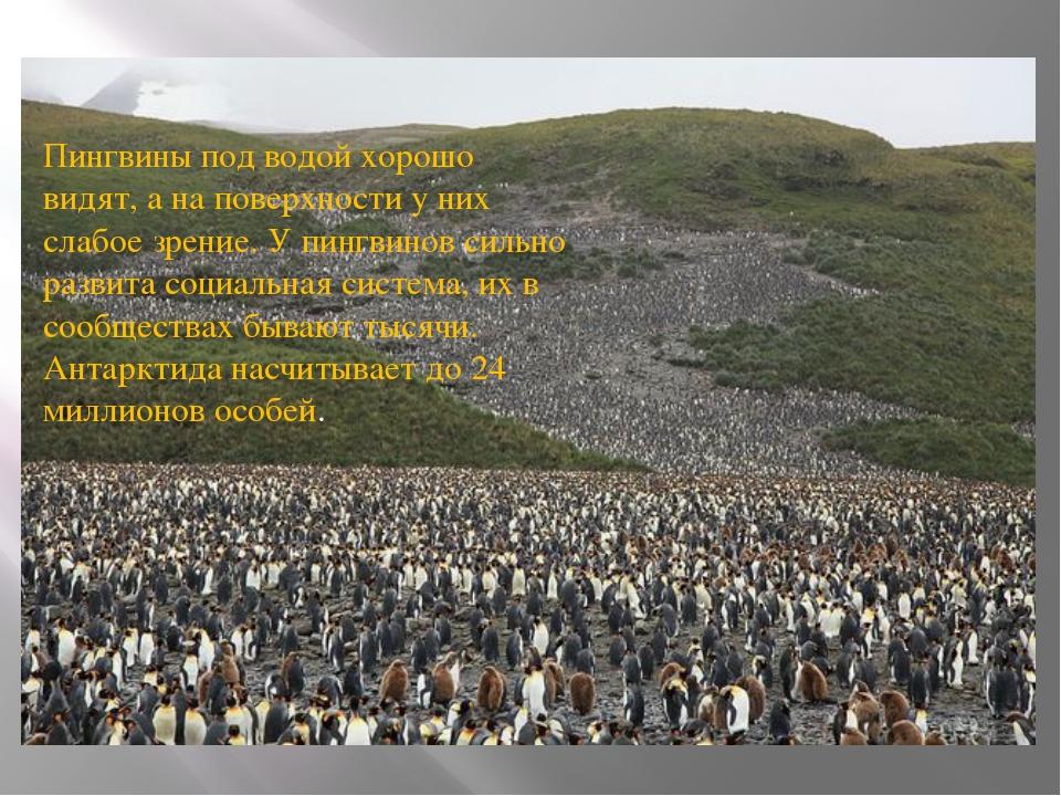Пингвины под водой хорошо видят, а на поверхности у них слабое зрение. У пин...