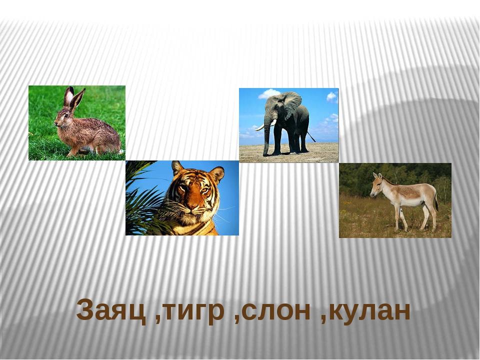 Заяц ,тигр ,слон ,кулан
