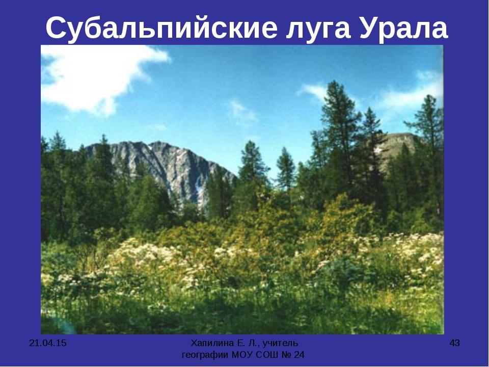* Хапилина Е. Л., учитель географии МОУ СОШ № 24 * Субальпийские луга Урала Х...