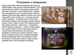 Из истории: Слово «курица» произошло от древнерусского «кур», что означало «п