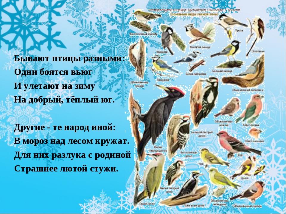Бывают птицы разными: Одни боятся вьюг И улетают на зиму На добрый, тёплый ю...