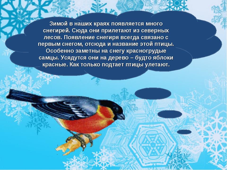 Зимой в наших краях появляется много снегирей. Сюда они прилетают из северных...
