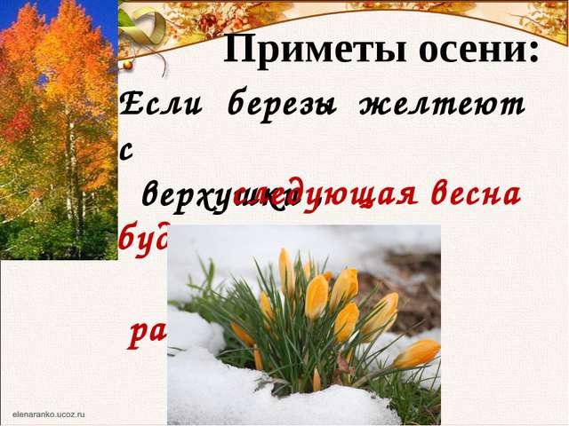 Приметы осени: Если березы желтеют с верхушки , следующая весна будет ранняя