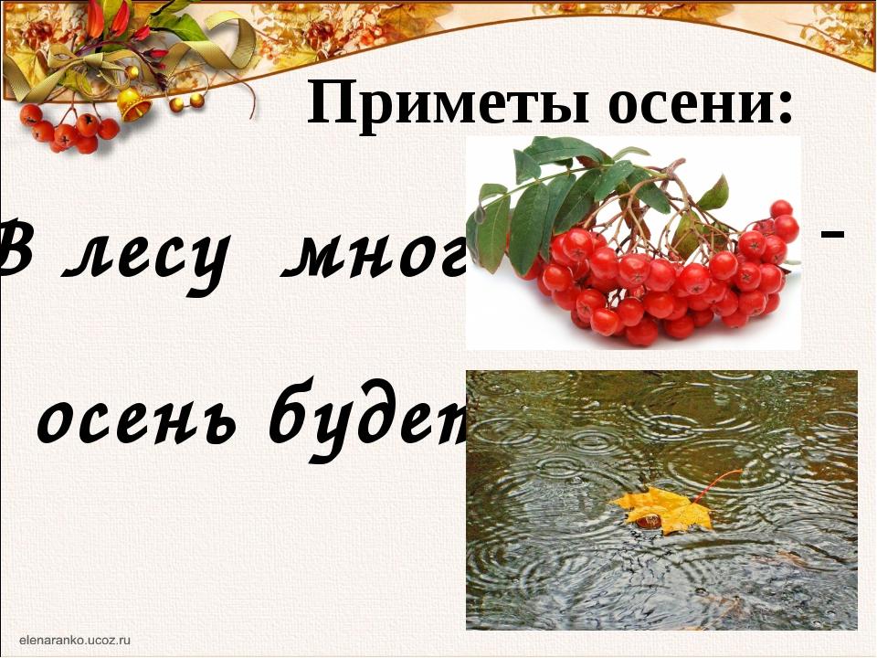 Приметы осени: В лесу много - осень будет