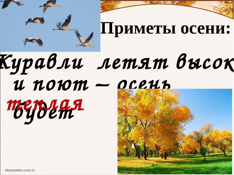 Приметы осени: Журавли летят высоко и поют – осень будет теплая