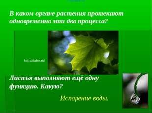 В каком органе растения протекают одновременно эти два процесса? http://daler