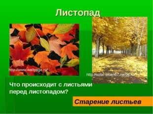 Листопад Что происходит с листьями перед листопадом? Старение листьев http://