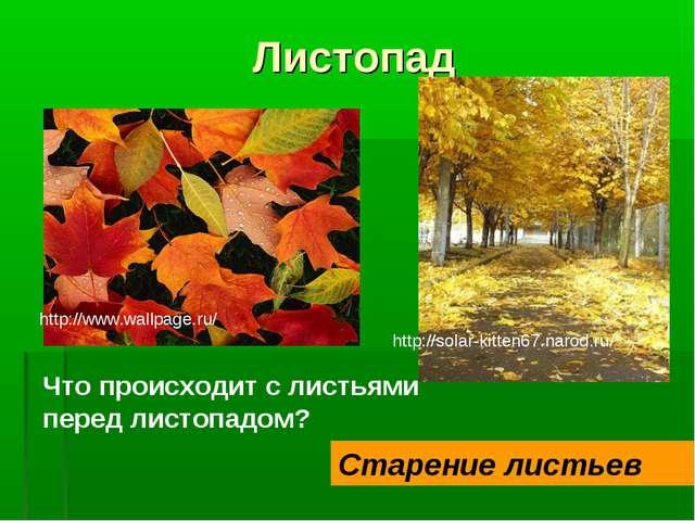 Листопад Что происходит с листьями перед листопадом? Старение листьев http://...