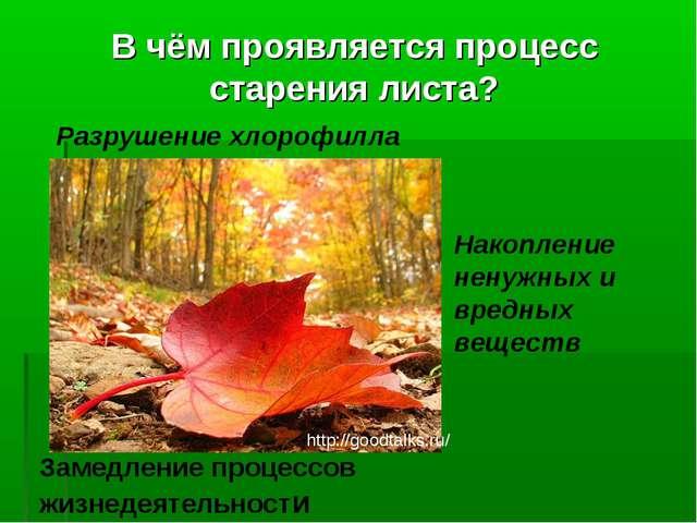 В чём проявляется процесс старения листа? Разрушение хлорофилла Накопление н...