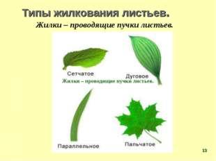 Типы жилкования листьев. Жилки – проводящие пучки листьев. Жилки – проводящие