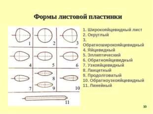 Формы листовой пластинки 1. Широкояйцевидный лист 2. Округлый 3. Обратноширок