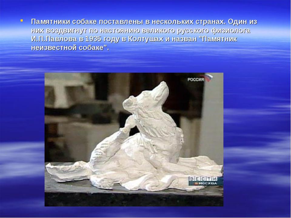 Памятники собаке поставлены в нескольких странах. Один из них воздвигнут по н...
