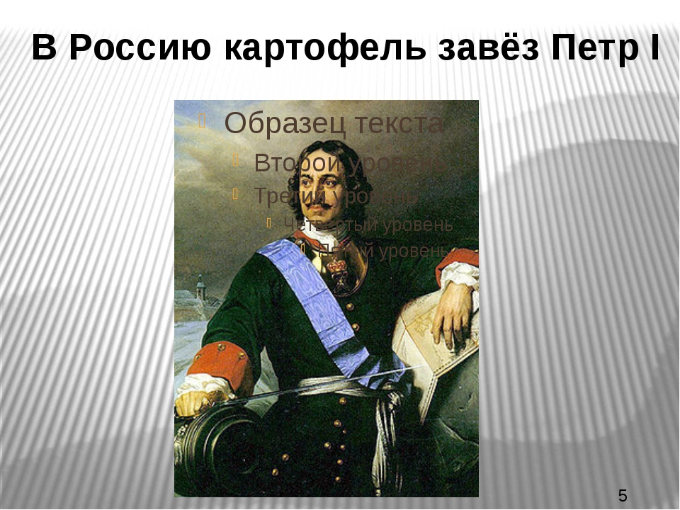 В Россию картофель завёз Петр I