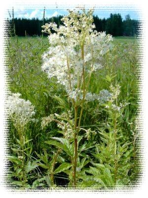Охрана дикорастущих лекарственных растений и их ресурсов