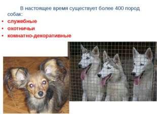 В настоящее время существует более 400 пород собак: служебные охотничьи к