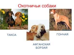 Охотничьи собаки АФГАНСКАЯ БОРЗАЯ ГОНЧАЯ ТАКСА