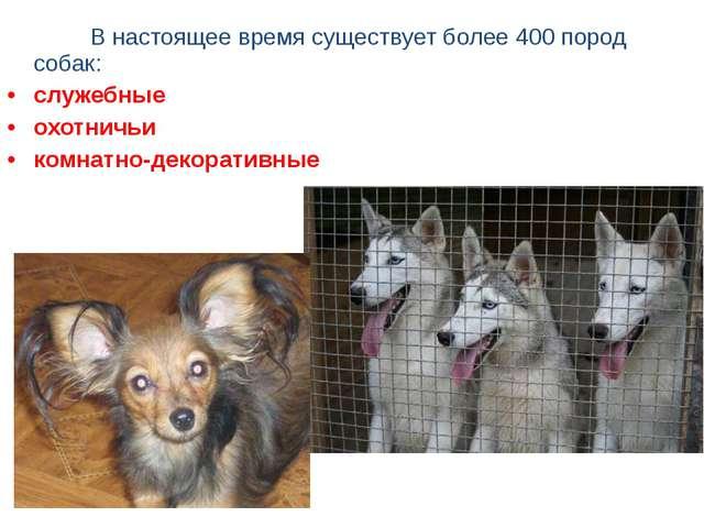 В настоящее время существует более 400 пород собак: служебные охотничьи к...