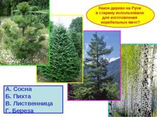 Какое дерево на Руси в старину использовали для изготовления корабельных мачт