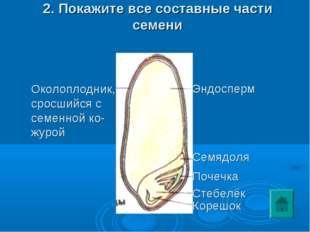 2. Покажите все составные части семени Околоплодник, сросшийся с семенной ко-